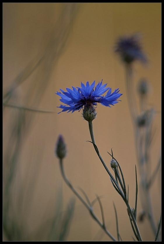 2010-06-27 bloem 01