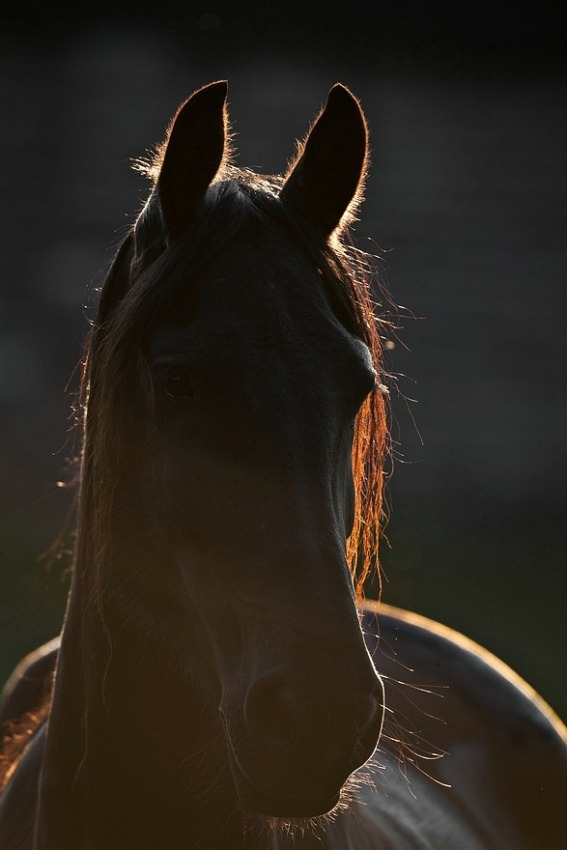 2010-07-30 Paard Tegenlicht