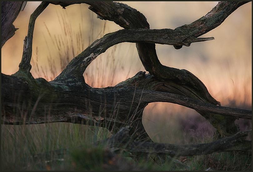 2010-10-10 Dood hout 01