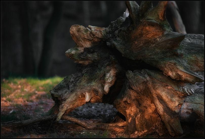 2010-10-10 Dood hout 03