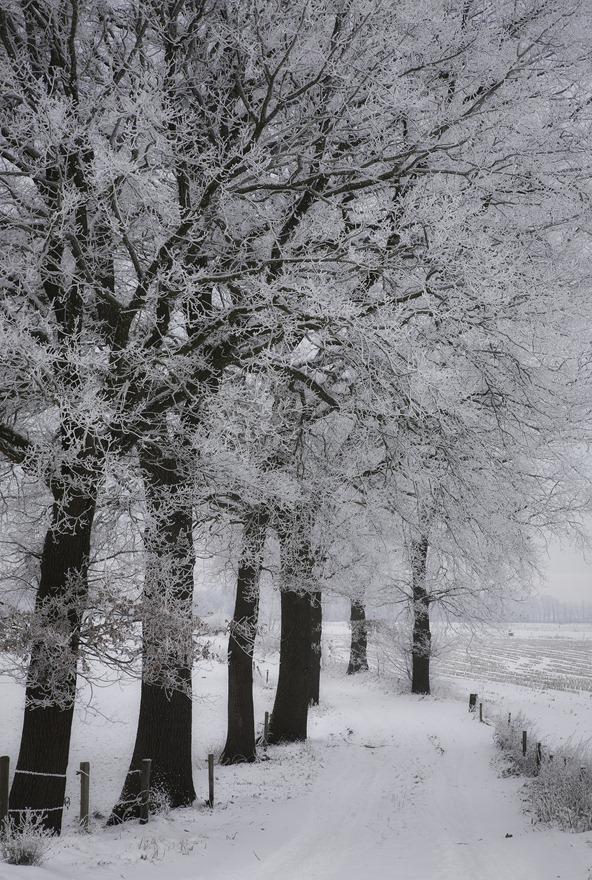 2010-12-21 Winter 01