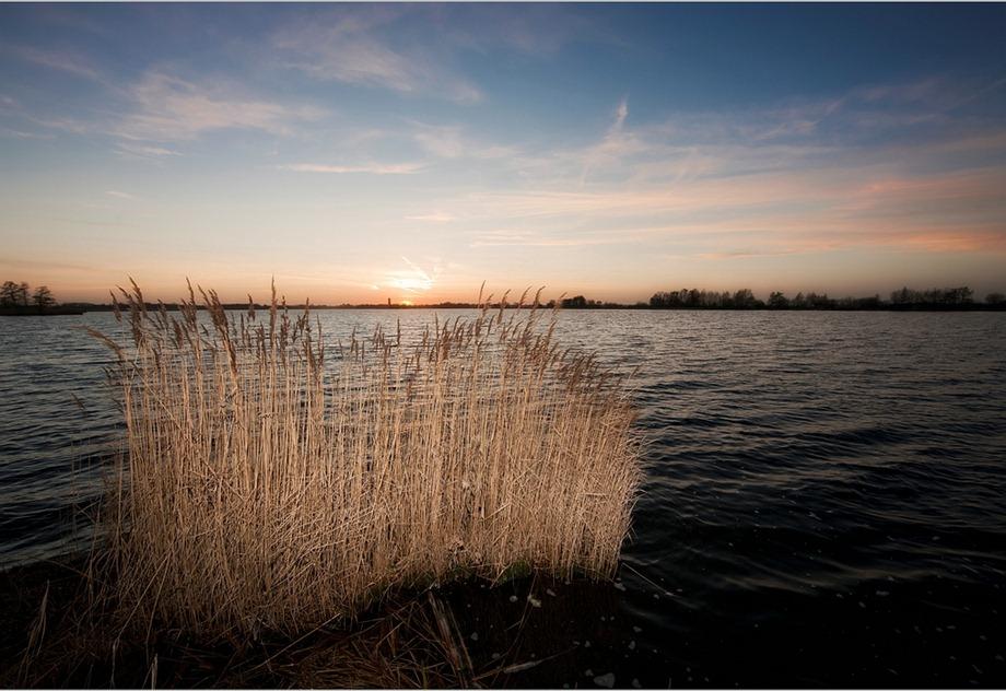 2011-02-03 Rietoogst 01