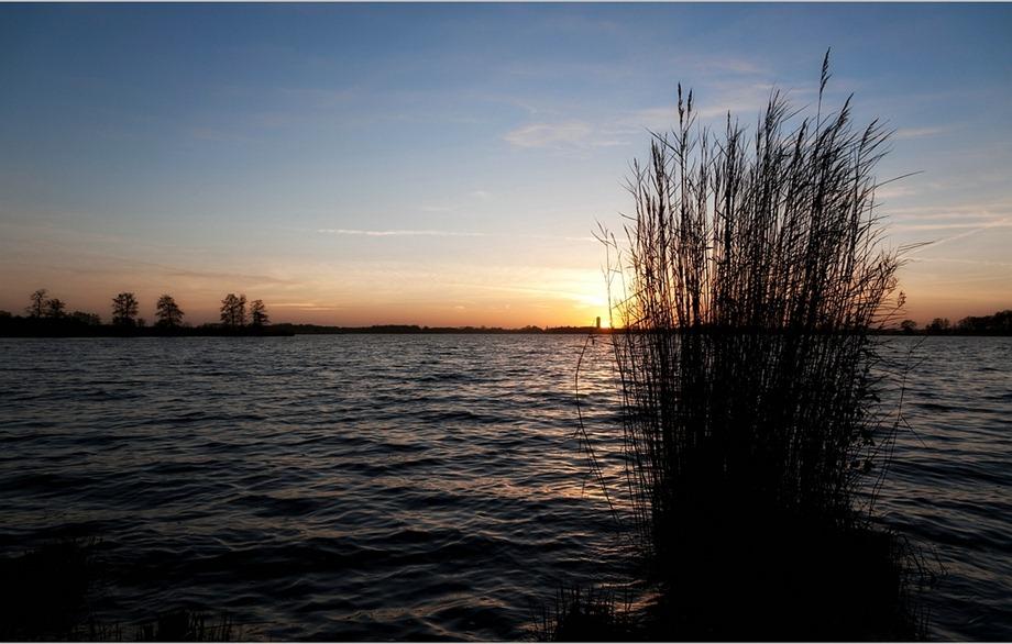 2011-02-03 Rietoogst 02