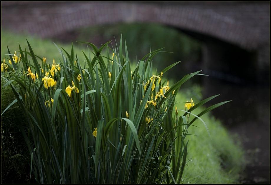 2011-05-17 Gele lissen