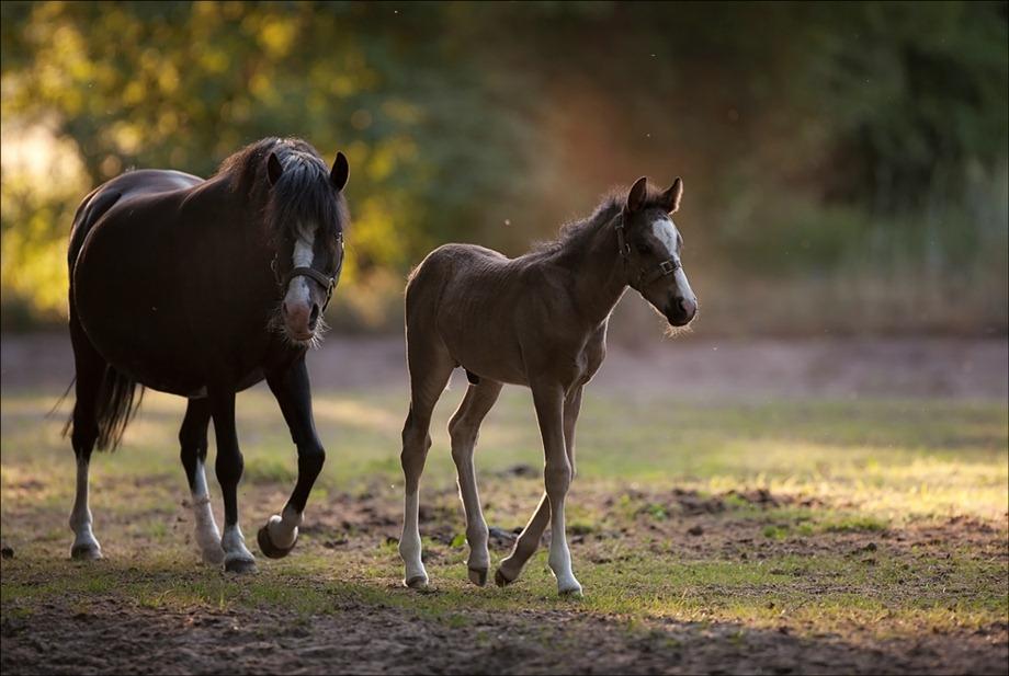 2011-05-25 Paarden 01