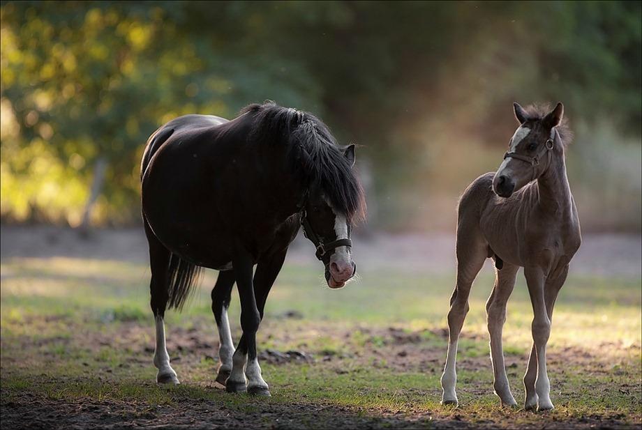 2011-05-25 Paarden 02