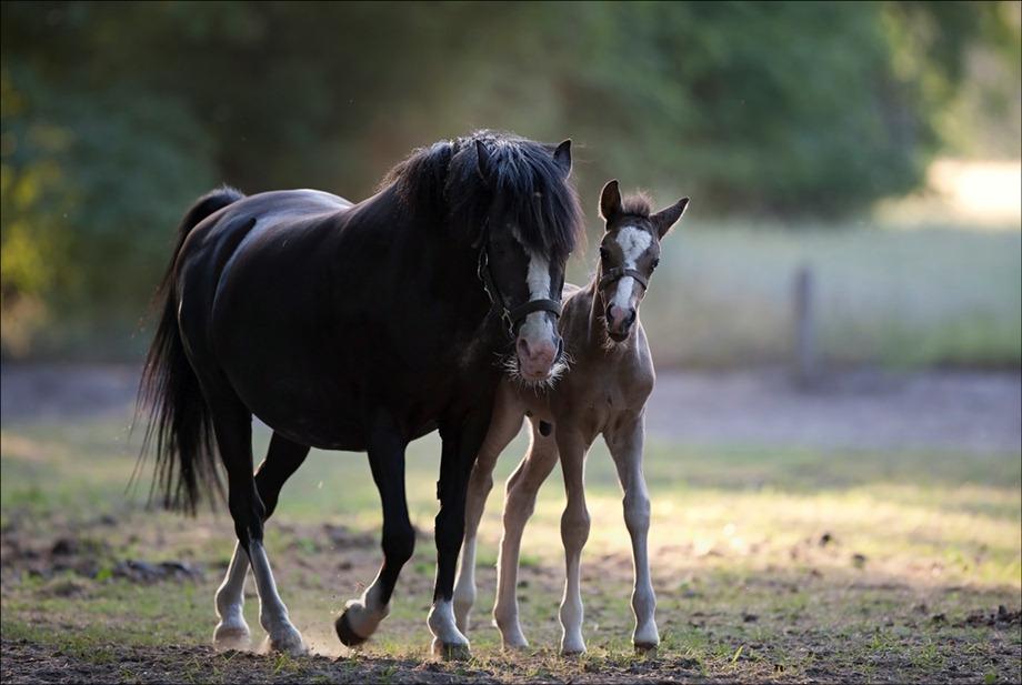 2011-05-25 Paarden 03