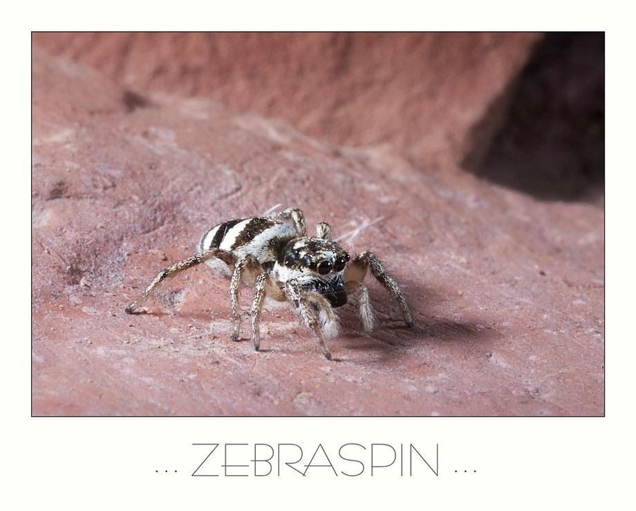 2011-05-30 Zebraspin Kader 01