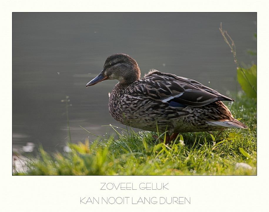 2011-06-12 Eenden Kader 02