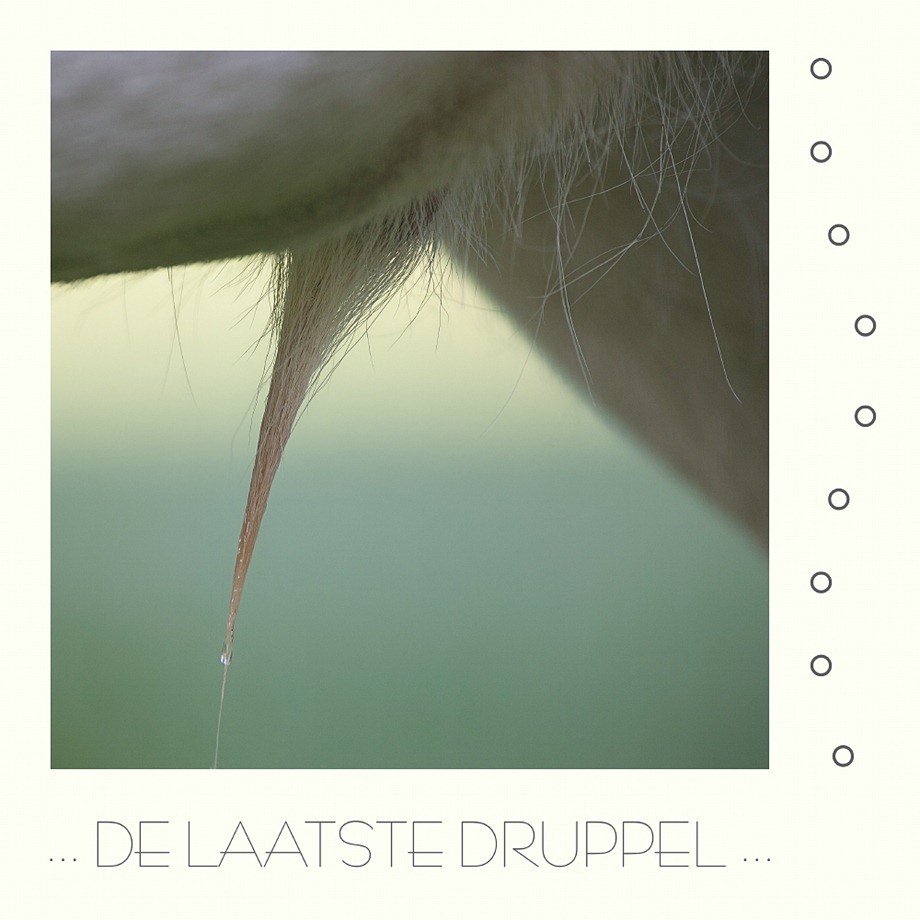 sized_2011-060-12 Laatste drupje Hertje Kader