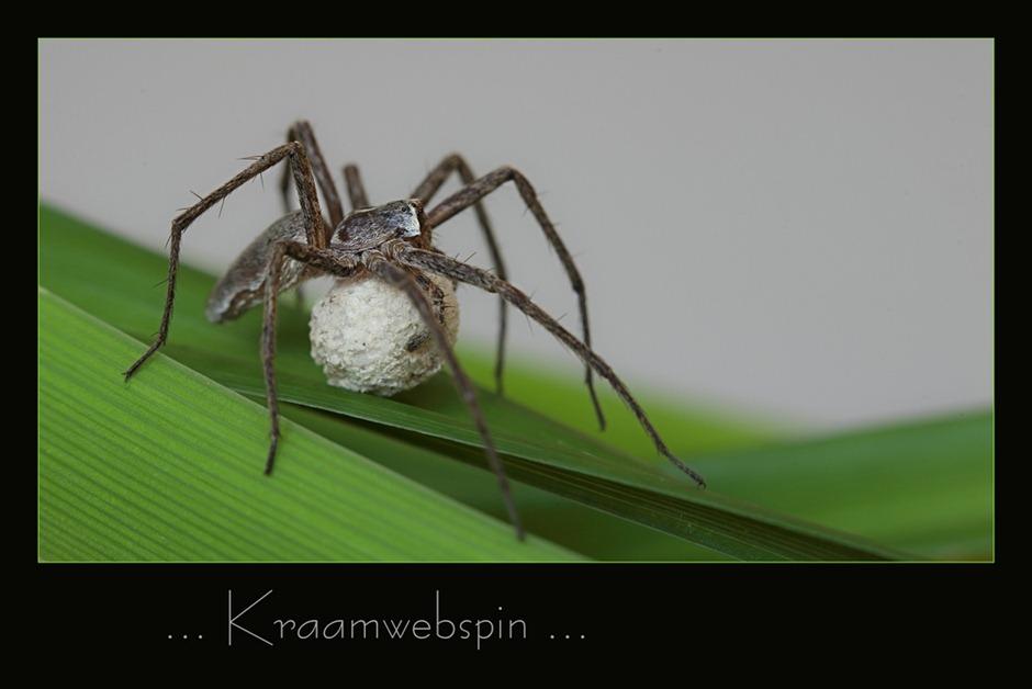 Kraamwebspin 04