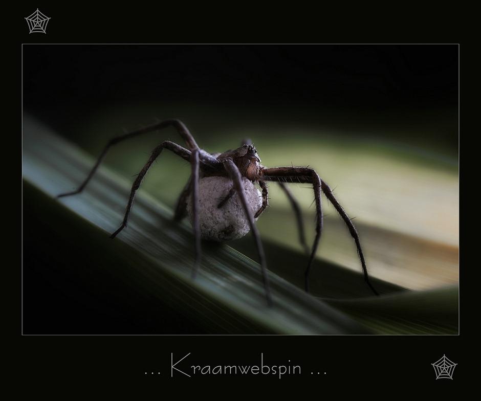 Kraamwebspin 03
