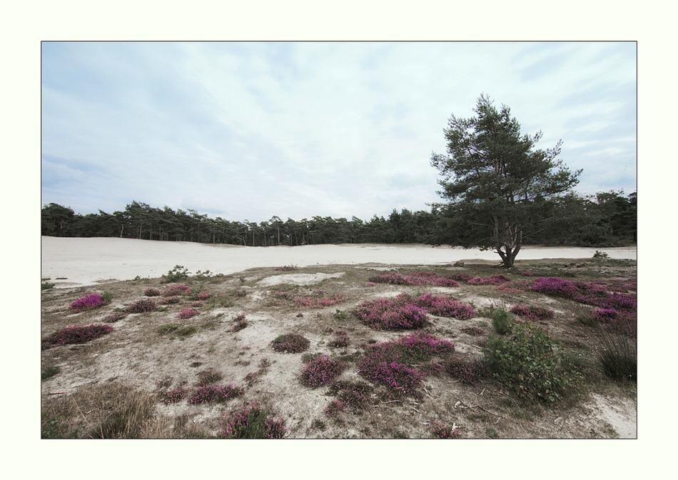 Sahara Ommen 03