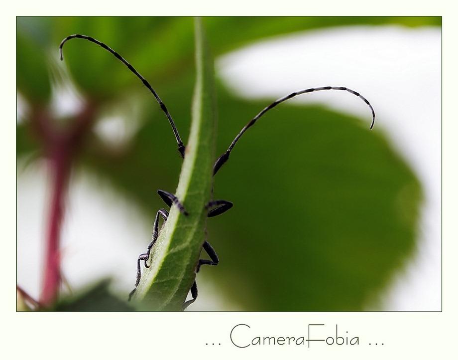 camera angst
