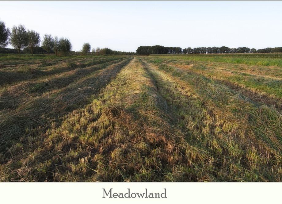 Hooiland 03