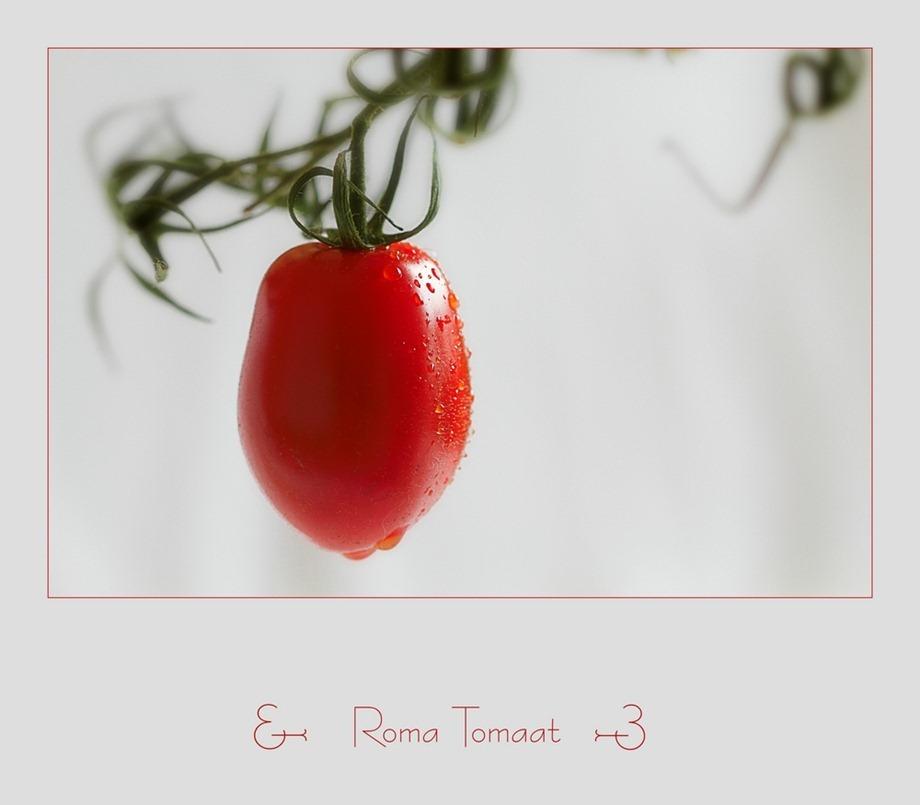 Roma Tomaat 02