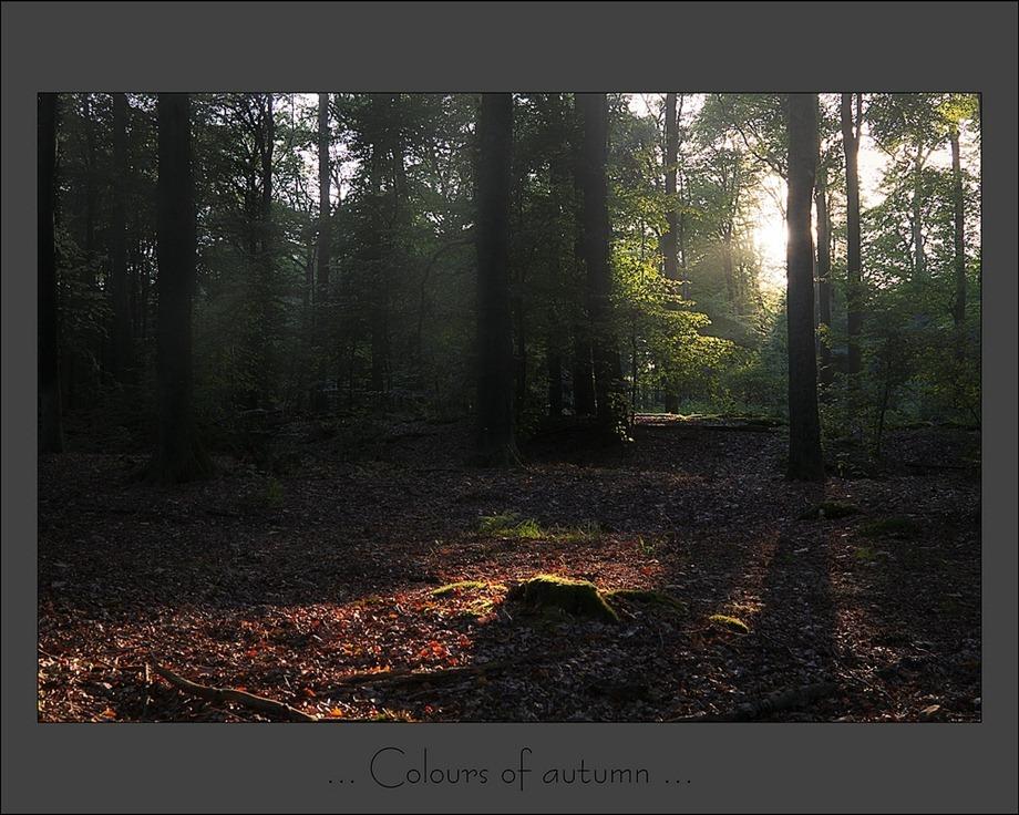 Herfstbos Landgoed Het Laer