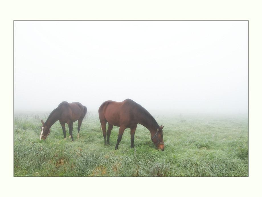 2011-10-02 Paarden  02