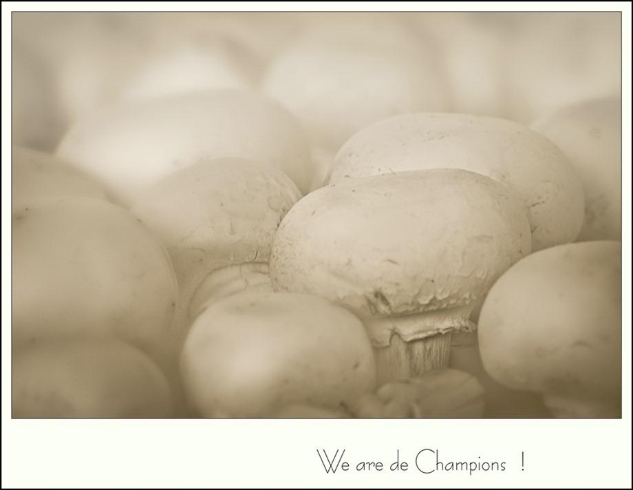 Champignons Paddestoel