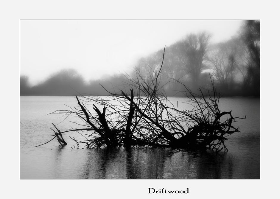 Driftwood drijfhout