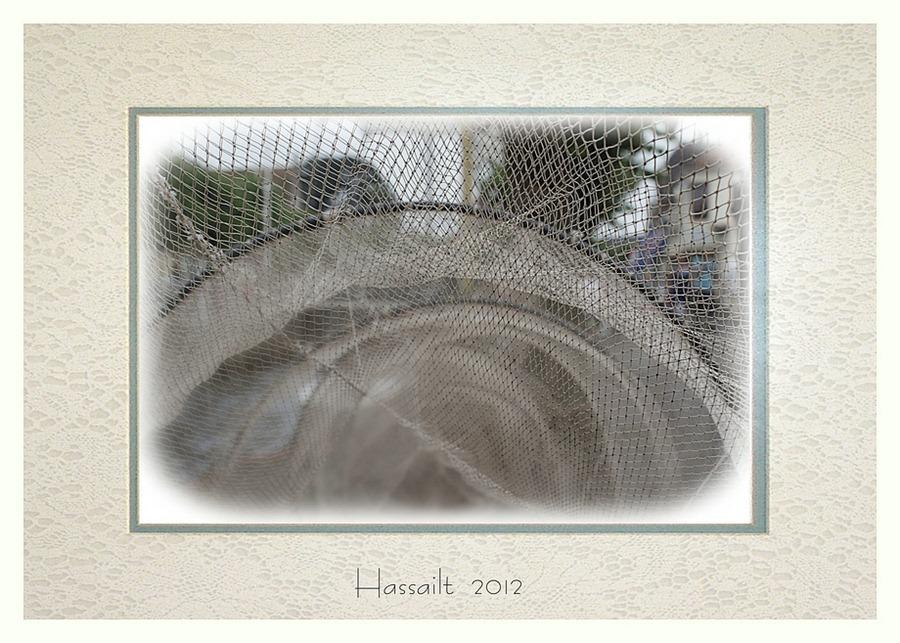 Visnet Hasselt Hassailt