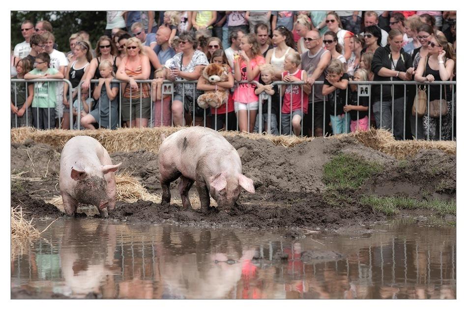 Dicky Woodstock 2013  Zwientie Tikken