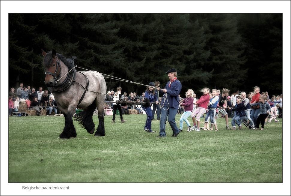 Paard en Erfgoed Trekpaard 02