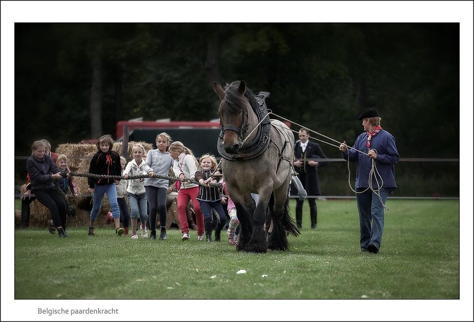 Paard & Erfgoed Trekpaard 01