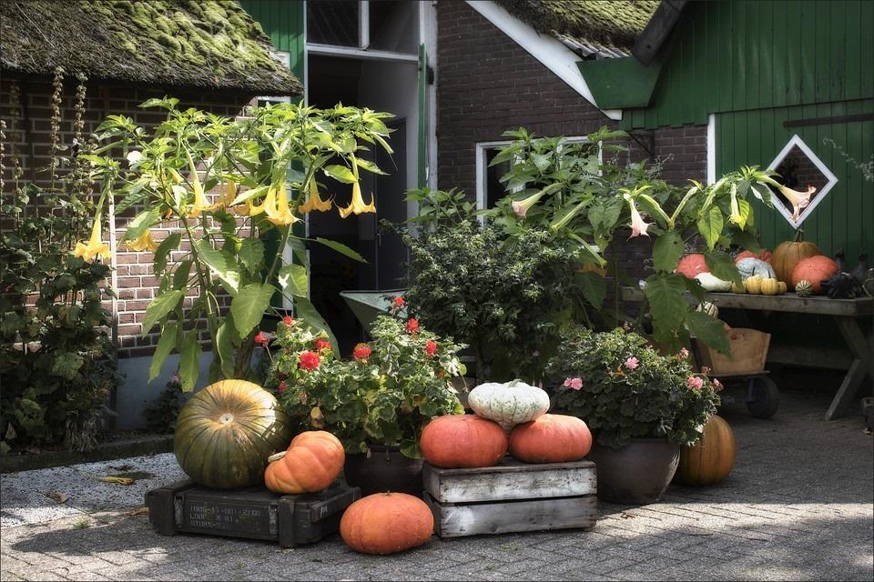 Staphorst Foto Oude Riksweg Foto Pompoenen Foto Diekloop