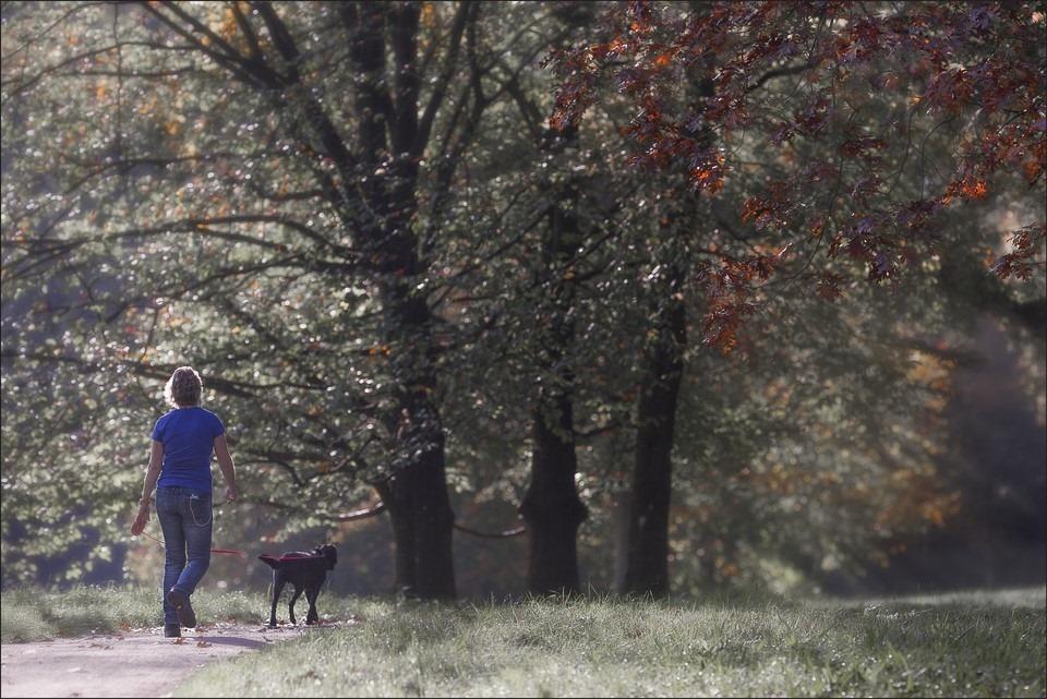 Actief met je hond Foto Wandelen met je hond Foto Zwolle Engelse Werk Foto Engelse Werk