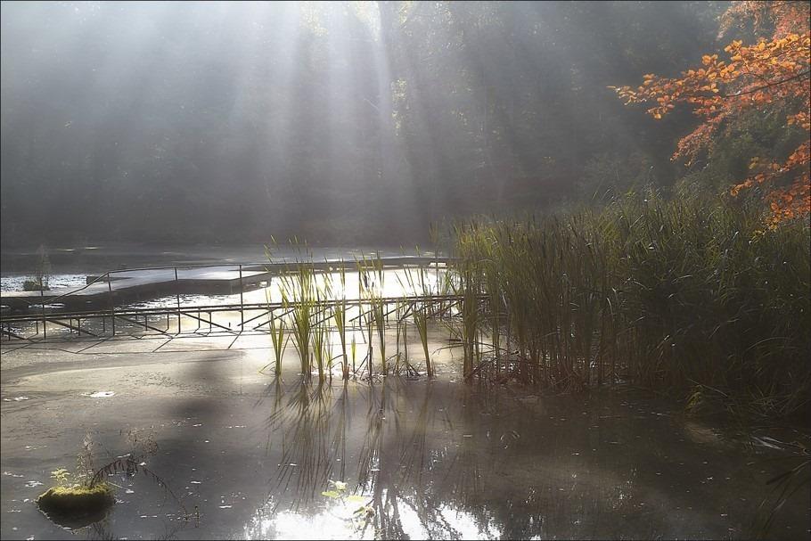 Waterloopbos Foto Waterloopbos Marknesse Foto Paradijs