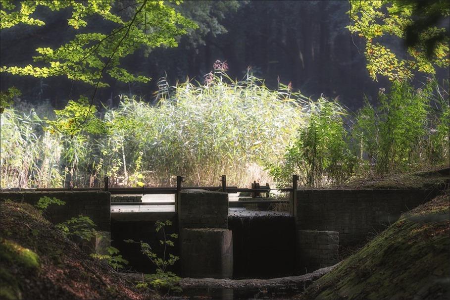 Waterloopbos Foto Waterloopbos Marknesse Foto wandelroute Waterloopbos