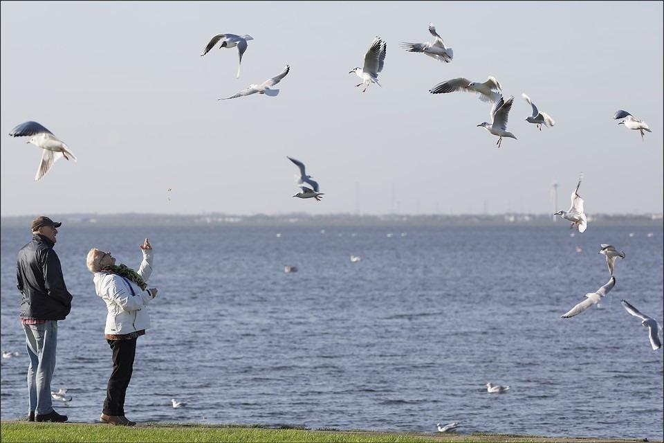 Harderwijk Foto Veluwemeer Foto Meeuwenoverlast Foto Meeuwen Voeren Foto Uitwaaien
