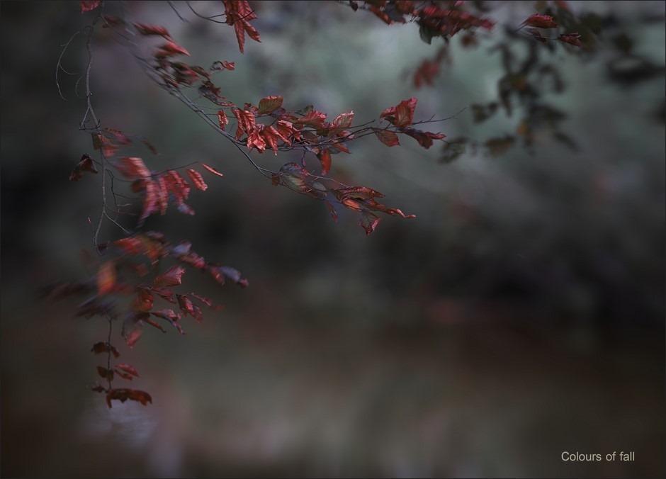 Najaarskleuren 2014 Foto Najaarsmode Foto Kleuren van de Herfst Foto Kleurstylist Foto Dode Bladeren