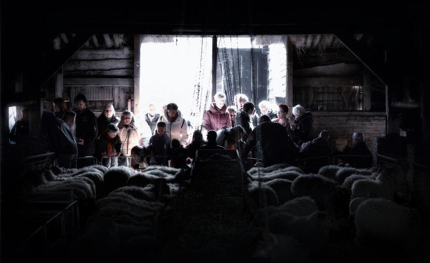 Lammetjesdag Foto Lammetjesdag Ruinen Foto Schaapskudde Ruinen Foto Schaapskooi Ruinen Foto Schaapskooi Dwingelerveld Foto Drents Heideschaap Foto Drentse Heideschaap