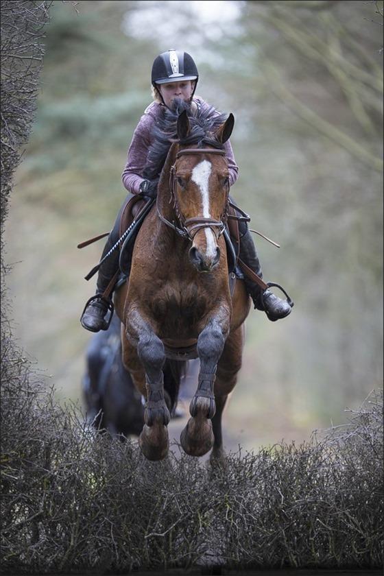 Boscross Staphorst Foto Staphorst Foto Staphorst Bosrit Foto Oefencross Foto Bosrit Foto Bosrit voor paarden en pony's 02