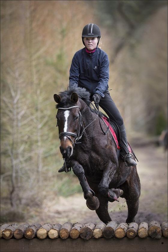 Boscross Staphorst Foto Staphorst Foto Staphorst Bosrit Foto Oefencross Foto Bosrit Foto Bosrit voor paarden en pony's 03