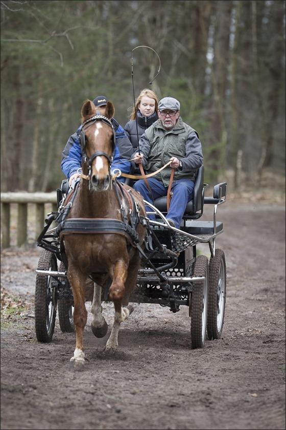 Boscross Staphorst Foto Staphorst Foto Staphorst Bosrit Foto Oefencross Foto Bosrit Foto Bosrit voor paarden en pony's 09
