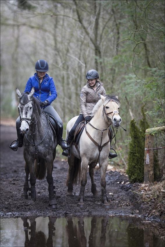 Boscross Staphorst Foto Staphorst Foto Staphorst Bosrit Foto Oefencross Foto Bosrit Foto Bosrit voor paarden en ponys