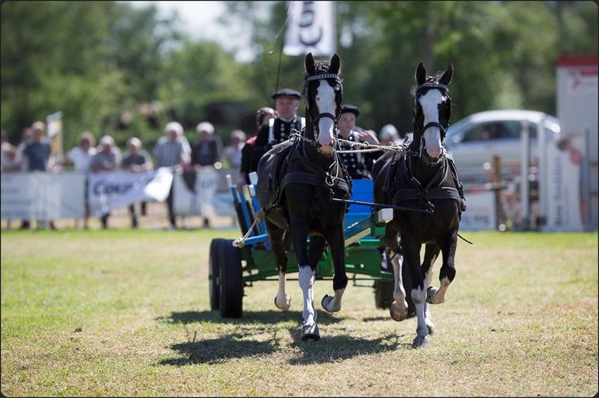 Concours Rouveen Foto CH Rouveen Foto Concours Foto Concours Hippique Foto Concours Hippique Rouveen 2015 Foto Boerenwagens