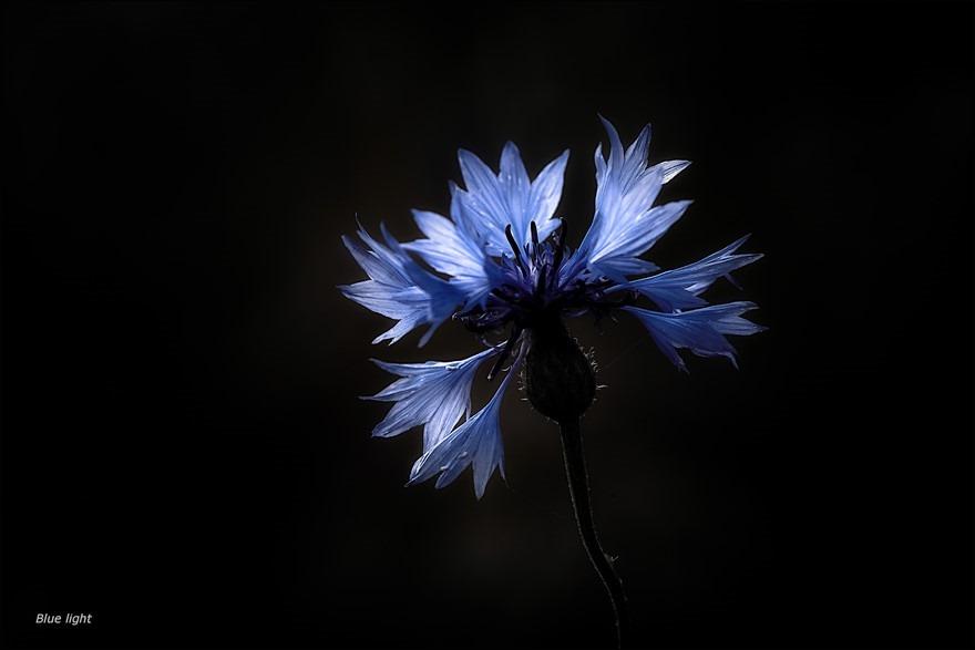 Blauw Licht Foto Blauwe Flora Foto Blauwe Bloem Foto Blue Light Foto Spelen met Licht