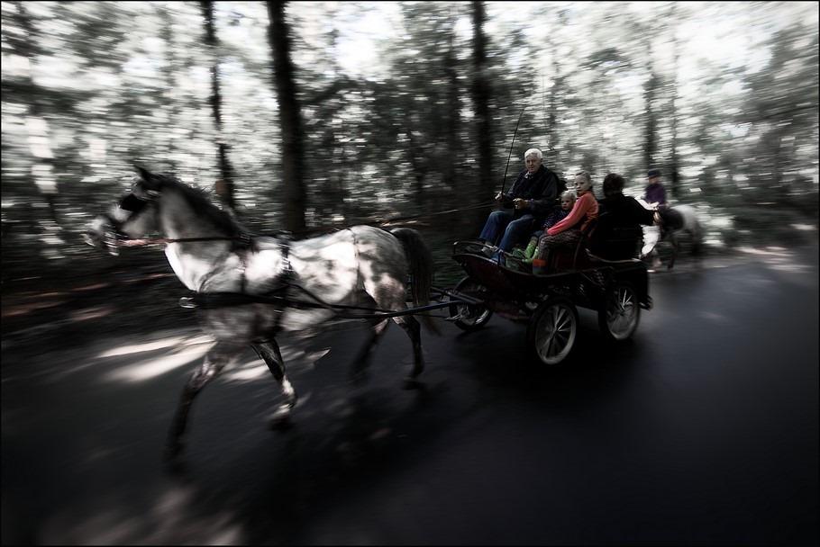 Staphorst Foto Staphorster Bos Foto Paard en Wagen Foto Koets Foto Onverwachte Situatie Foto Op Hol Geslagen Foto Op Hol Geslagen Paard Foto Paard Op Hol Geslagen Foto Perspectiefvertekening