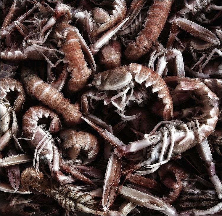 Zeevruchten Foto Zeevrucht Foto Zeefruit Foto Krab Foto Garnaal Foto Krabscharen, Foto Schaaldier