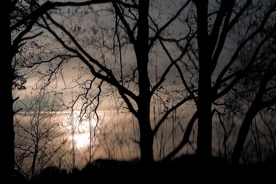 Avereest Foto In Nevelen Gehuld Foto Silhouet Foto Silhouette Foto Silhouette bomen Foto Vennetje Foto Mist Foto Filter Blur Foto Motion Blur