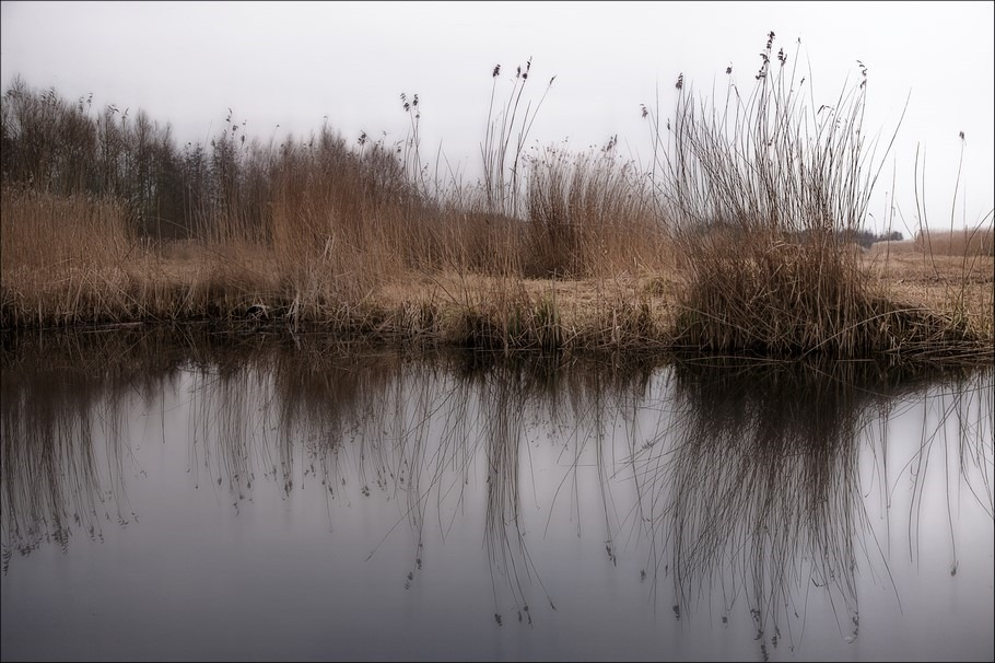 De laatste plukjes Foto Rietoogst Foto Riethalmen Foto Spiegeling Foto Verstilling Foto Verstild Landschap Foto Weerribben