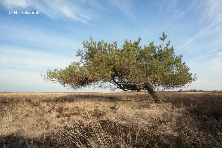 Groothoekperspectief Foto Landschapsfotografie Foto Dwingelerveld Foto Nationaal Park Dwingelerveld Foto Desolaat Landschap Foto Natuur in Drenthe Foto Heidegebied Foto Nationaal Park