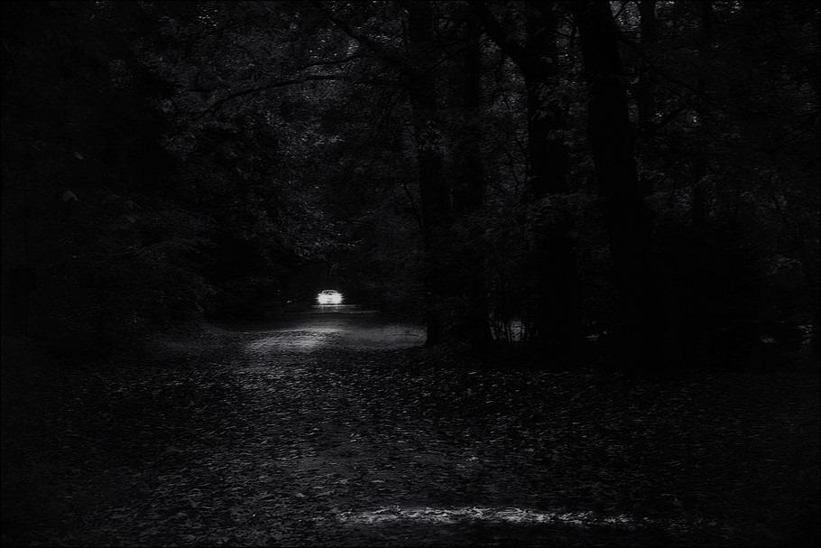 Terug naar de natuur Foto Felle koplampen Foto Koplampen Foto Bospad Foto Auto's in de natuur Foto Zwart Wit Foto Zwart Wit Bewerking
