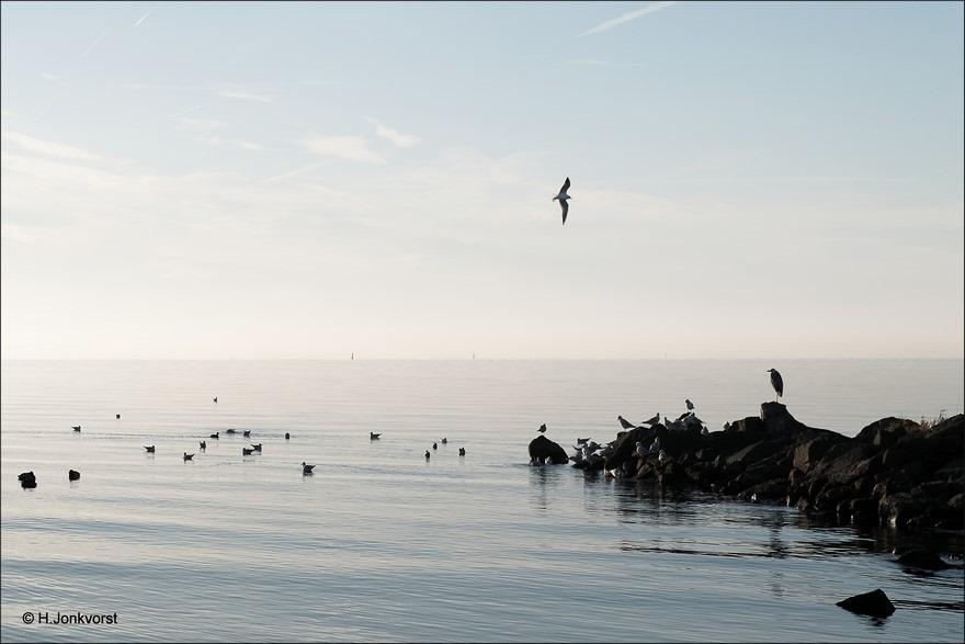 Urk Foto golfbreker Foto golfbrekers Foto meeuwen aan de kust Foto meeuwen op het water Foto Strand Urk Foto strand aan het IJsselemeer Foto IJsselmeer Foto Urk strand