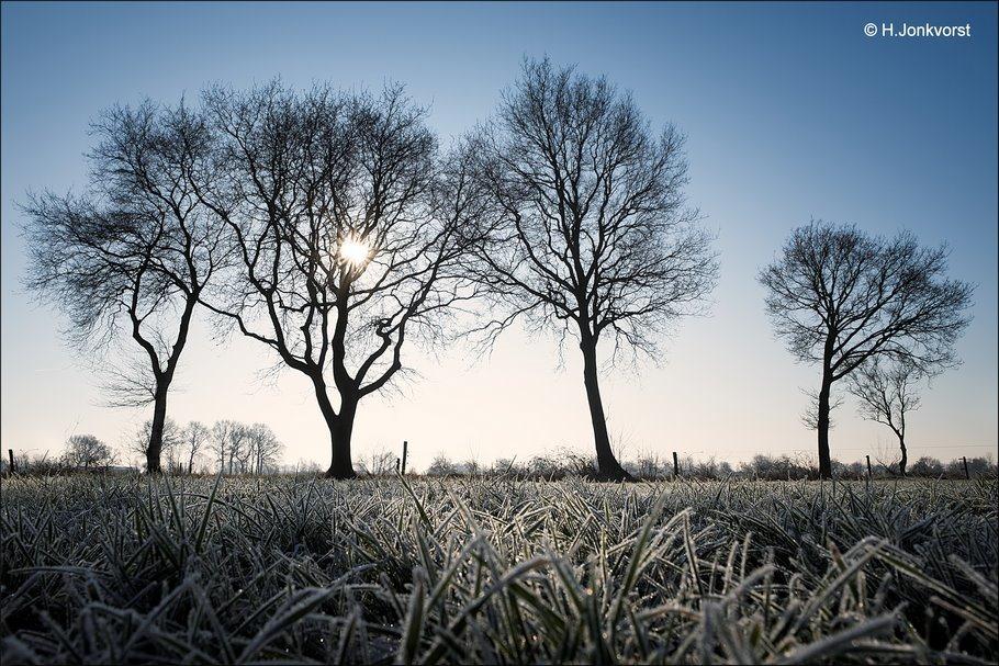 kikkerperspectief, Staphorst, Oude Achthoevenweg, laag standpunt fotografie, laag standpunt fotograferen, Fujifilm XT2, rijpaanslag, berijpt landschap, rijp