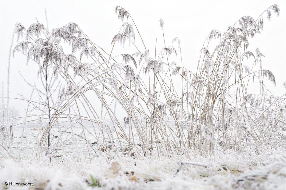 Staphorst, Reggersweg, Winter, winter in Staphorst, ijzingwekkende greep, berijpt landschap, landschap rijp, riethalmen, koning winter